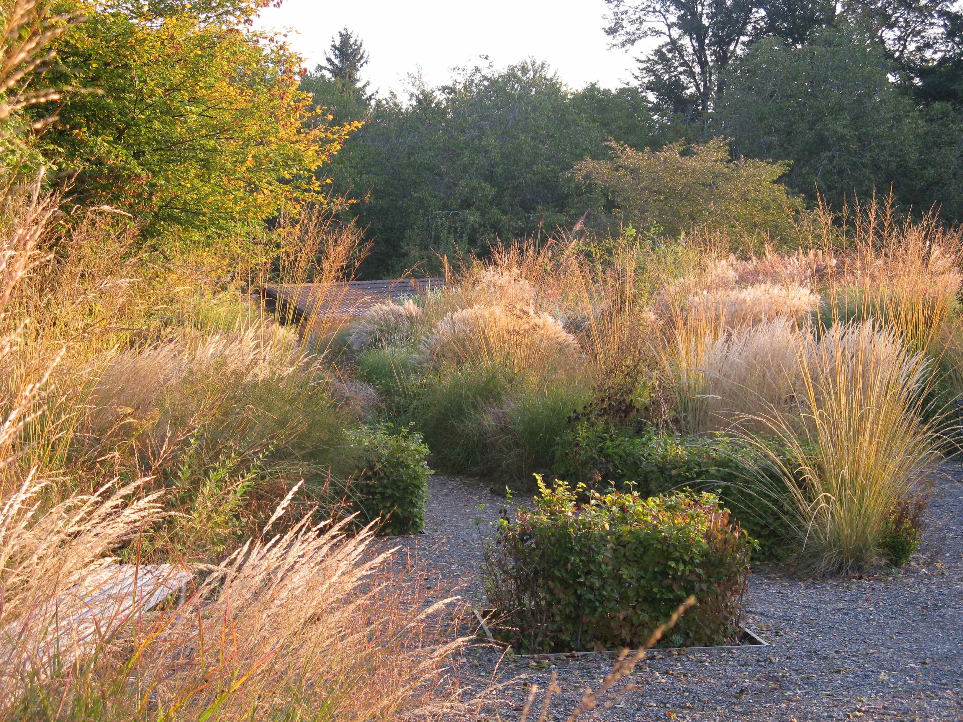 Gräsersorten gräsergarten pflanzen für nassen boden